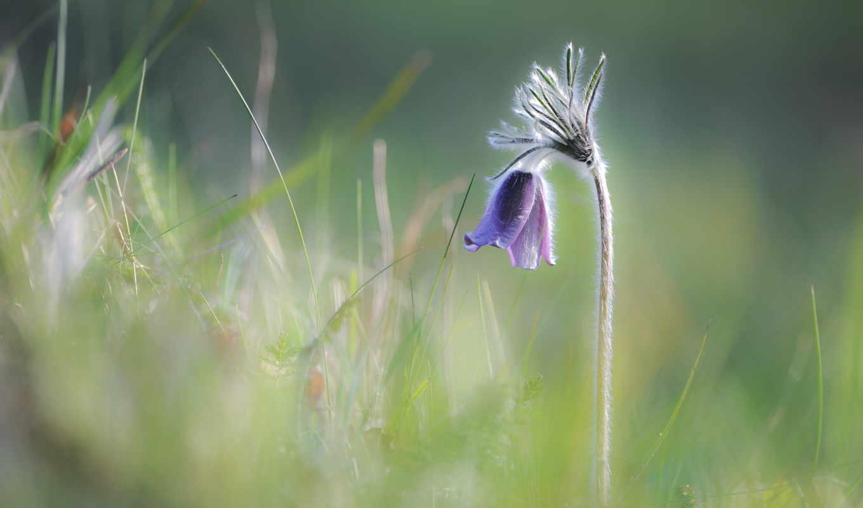 природа, jaro, цветок,