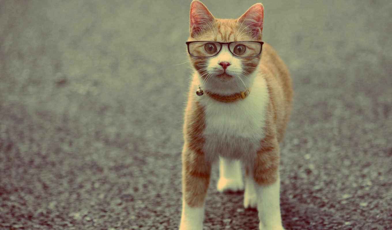 кот, очках, животные,