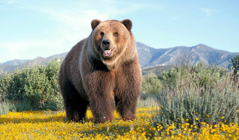 медведь, zhivotnye, медведи, white,