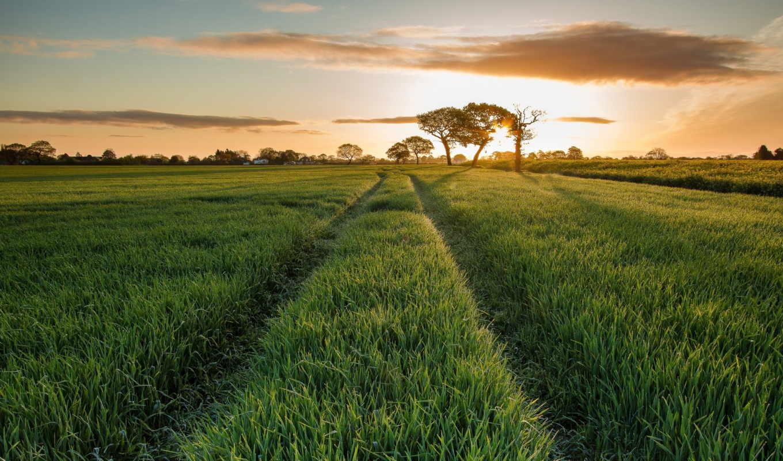 трава, поле, природа, дерево, oblaka, зелёный, небо, дорога, луг,