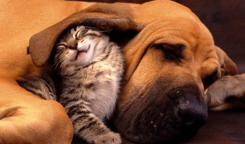 животных, дружба, людей, just, world, люди,