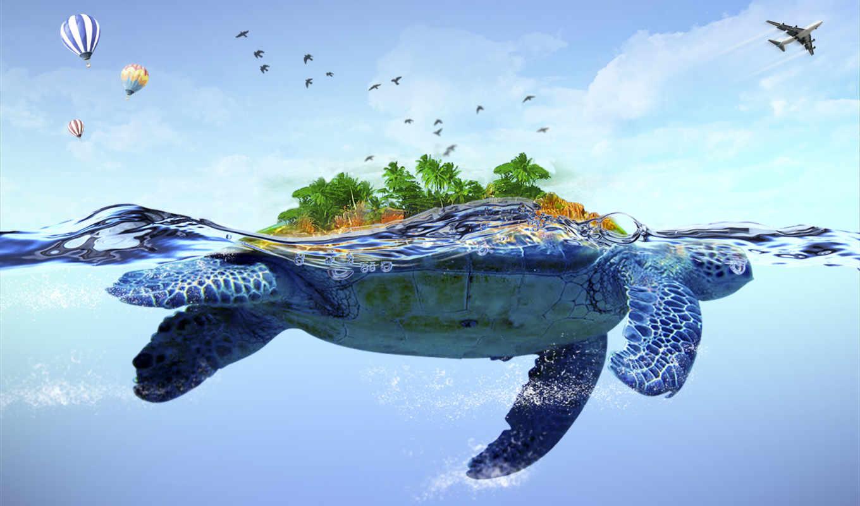 остров, море, черепахи, шары, черепаха, спина, фоны,