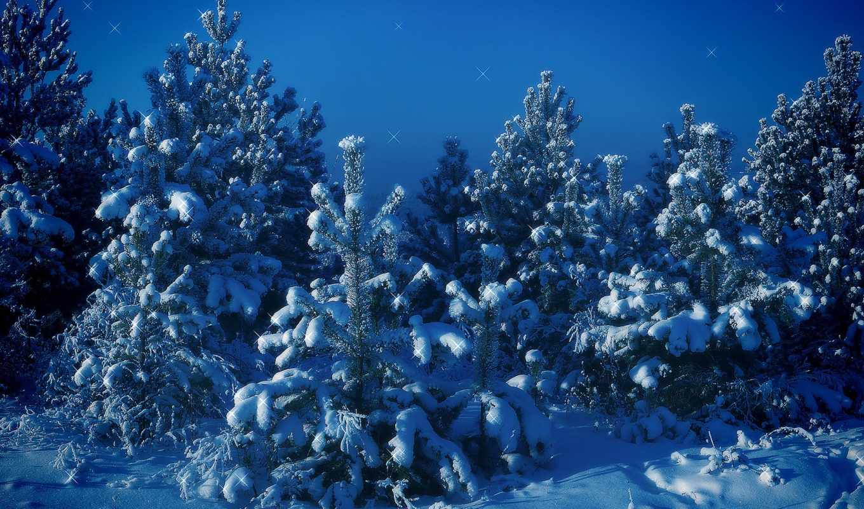 обои, зима, снег, елки, деревья, синий, горы, ночь