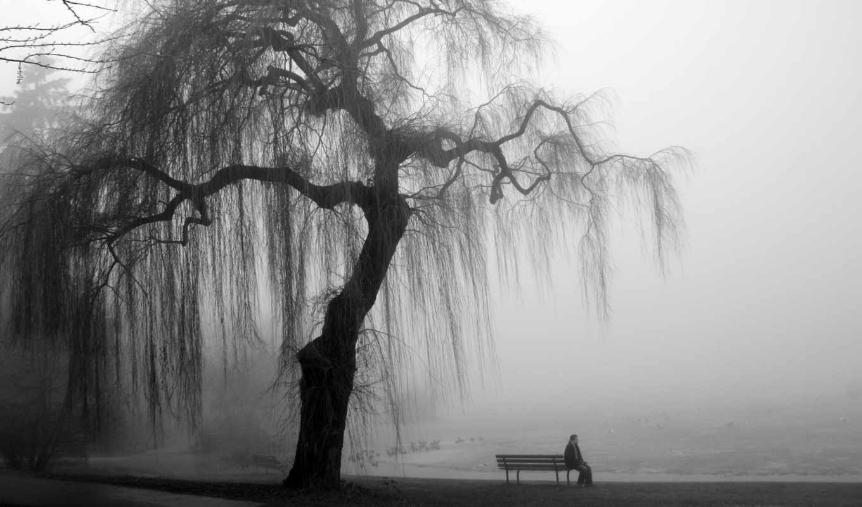 that, man, деревом, под, rejection, tree, скамейке,