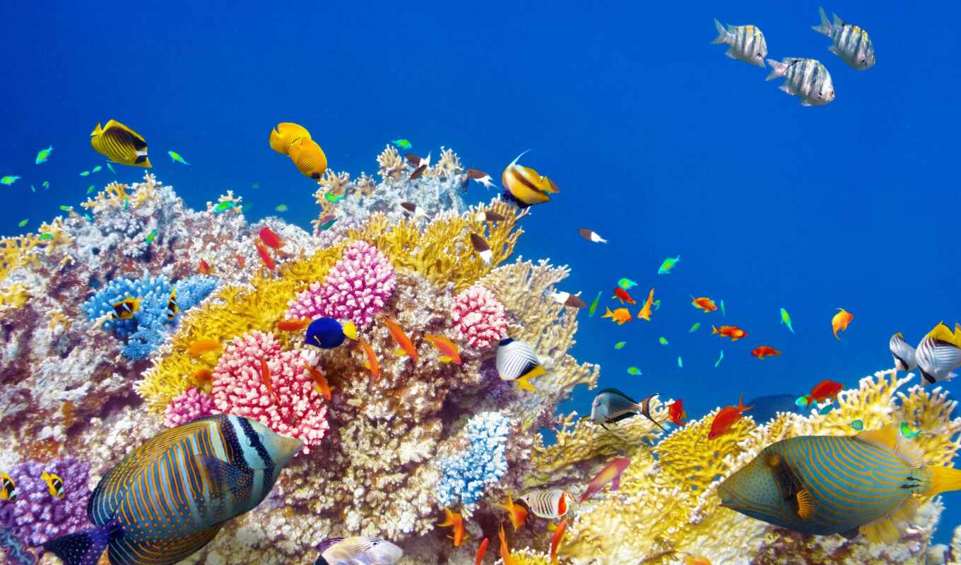 world, underwater, ocean, рыбки, риф, fishes, coral,