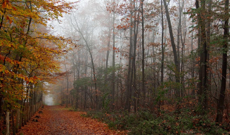 лес, осень, дорога, листва, день, зябкий, смотрите, картинка, nature,