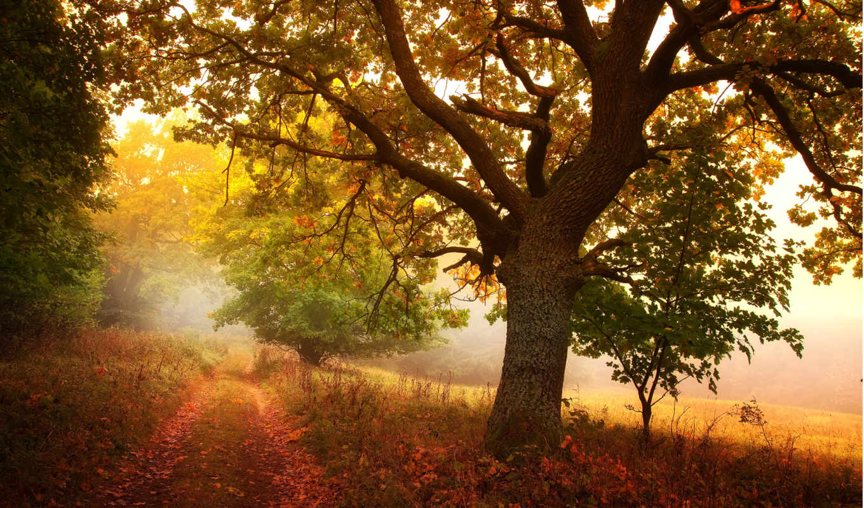 осень, деревья, природа, дорога, листья, дерево, тропа, лес, картинка, роща, дорожка,
