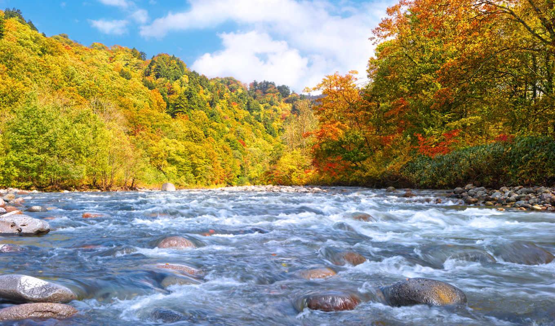 лес, осень, フォトグラファー, река,