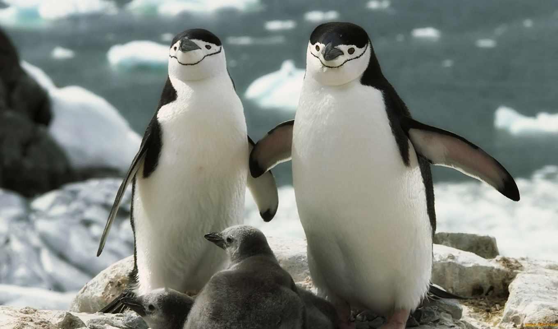 есть, лед, пингвины, холод, пингвин, case, пингвинов, приколы,