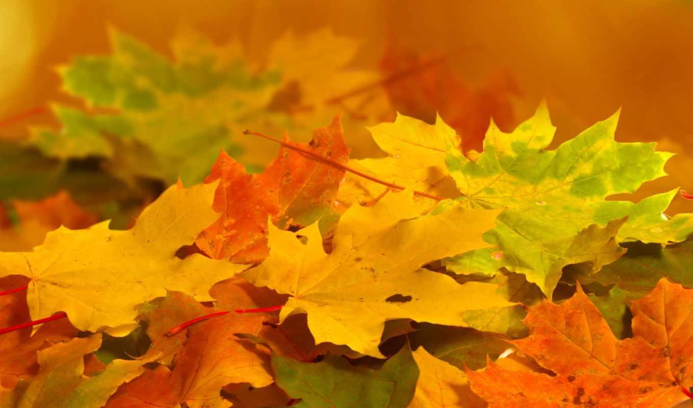 листья, оранжевые, осень, желтые, природа, зеленые,
