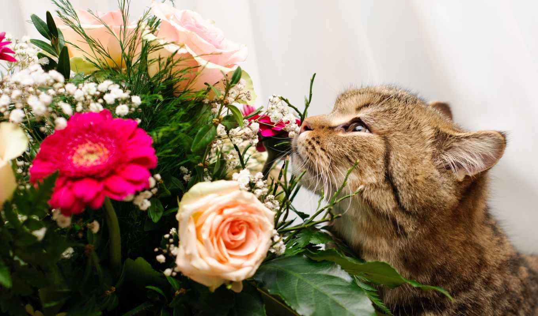 букет, кот, цветы, розы,