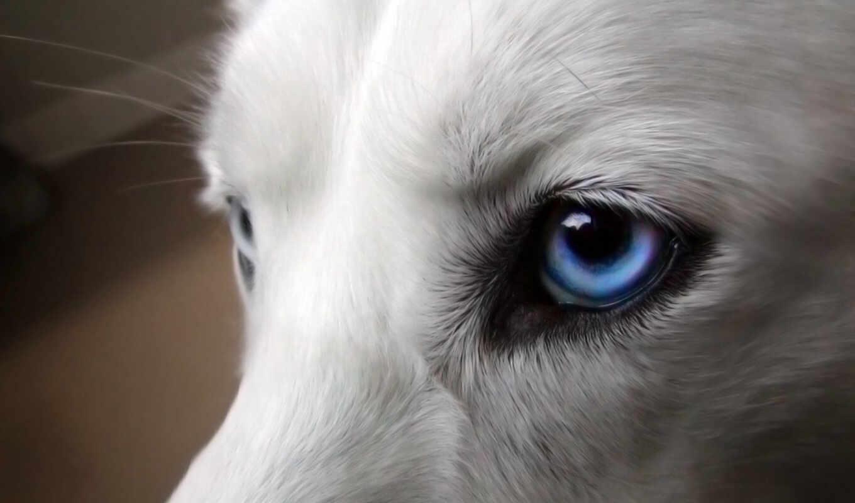 волки, волк, красивые, коллекция, красивый, волков, галереи, статусы,