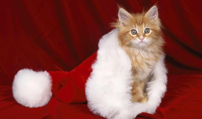 без, регистрации, телефон, new, год, zhivotnye, красивые, котенок, под, картинку, кошки,