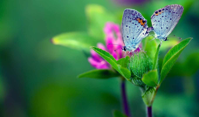 макро, цветок, бабочки, листья, зелёный, смотрите, номером,