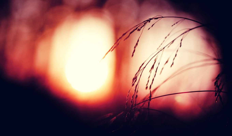 пшеница, трава, рассвет, макро, марта,