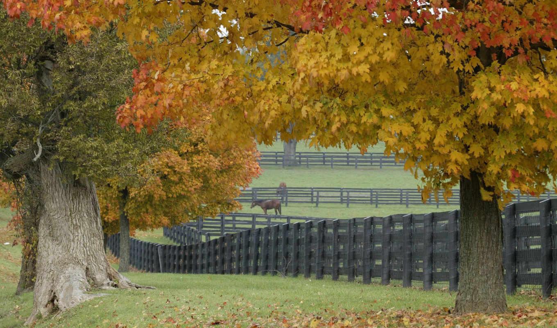 ферма, лошадиная, категория, осень, графика, добавить,