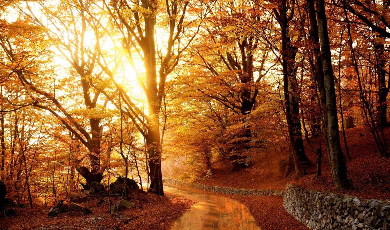 осень, landscape, деревья, свет, лес, trees, дорога, time, цитата, золотистый,