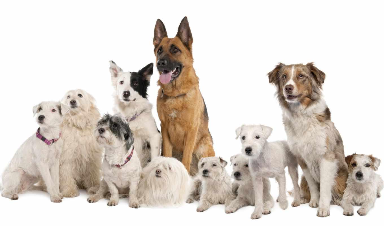 собаки, собака, породы, собаку,
