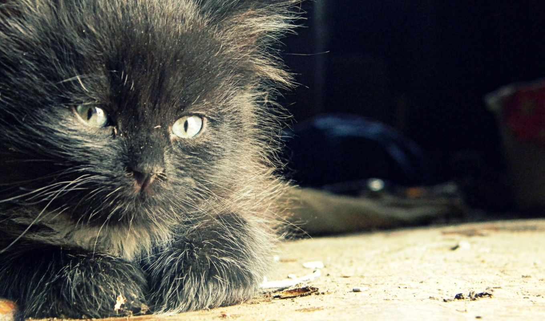 кот, animals, desktop, cats, high, hành, images,