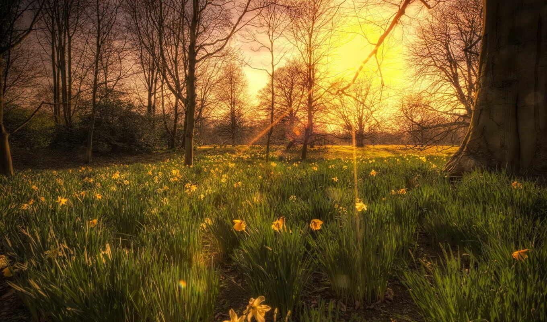 природа, деревья, закат, свет, цветы, картинка,