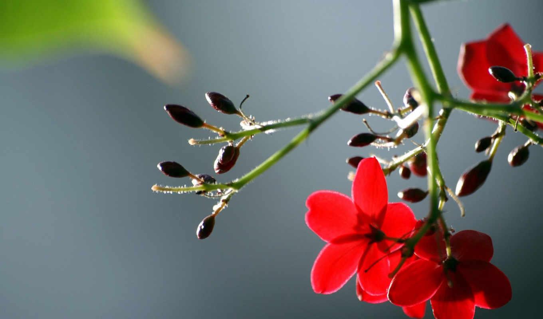 цветы, макро, pe, desktop, flowers, картинка, картинку, wallpaperul, din, apasa, download, garden, clik, seteaza, drepata, flori,