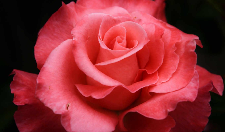 гугуш, роза, марта, хочу, googoosh,