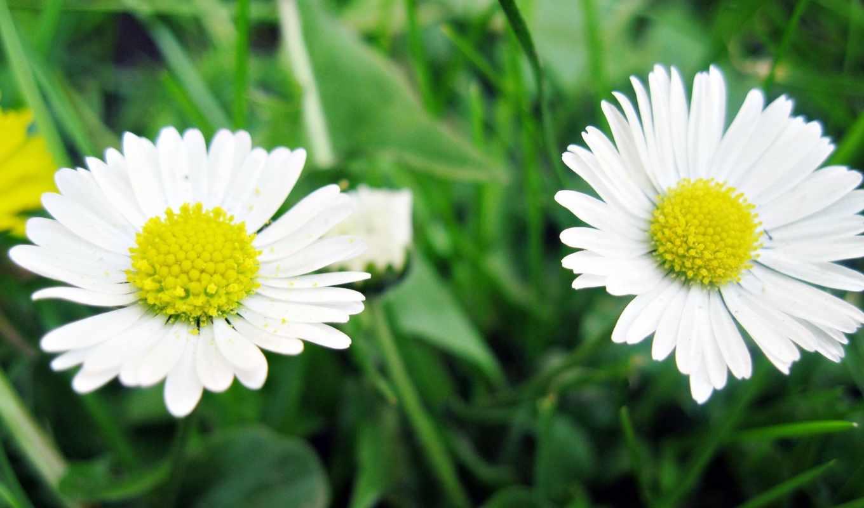 makro, cvety, priroda, желтые,