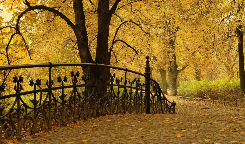 природа, осень, туман, фоны, листва, фотошопа, лес, использование,