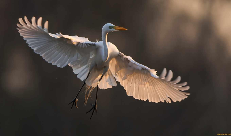 птица, wings, birds, крыло, flying, природа,