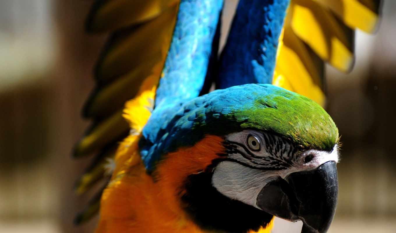 birds, фон, попугай, colorful, art, free,