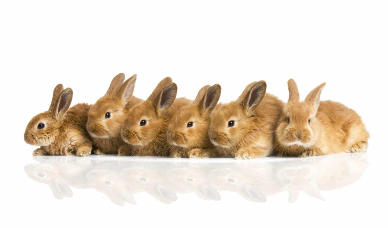 кролики, пушистики, компания, смотрите, кролик, строй, много,