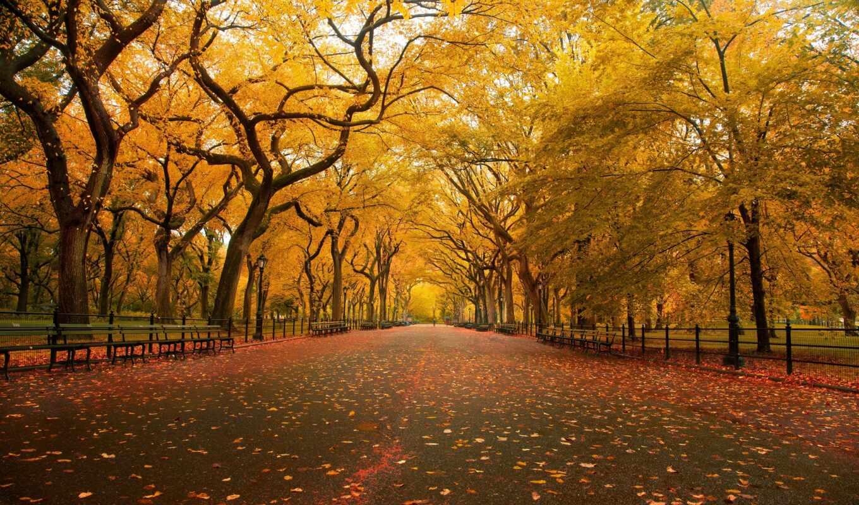 обои, осень, природа, парк, качестве, листья, дере
