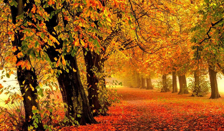 , осень, природа, алея, листья,