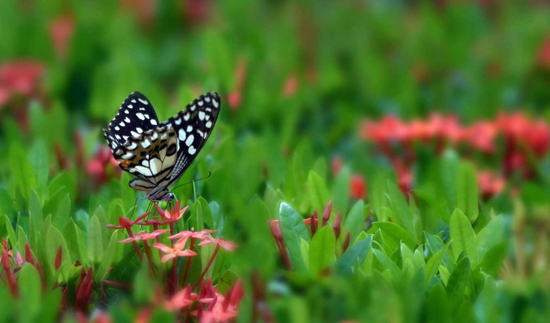 бабочка, цветы, красивое, весна, макро, desktop, сообщения, цитата,