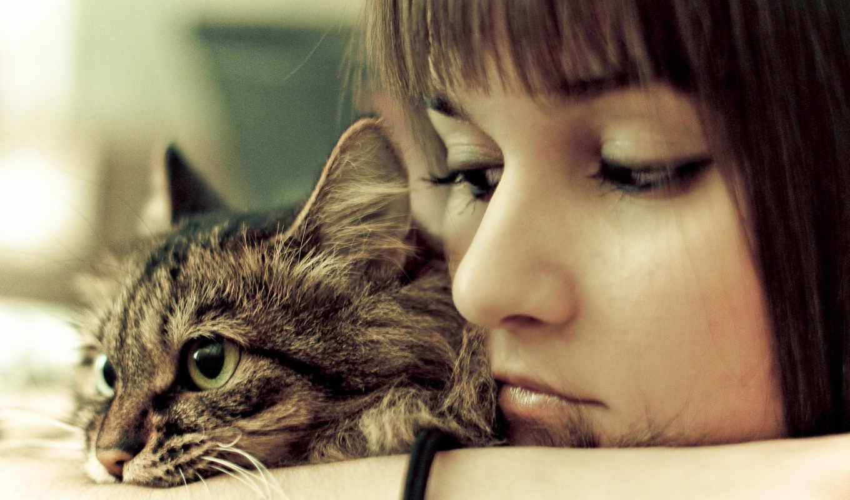 девушка, кошки, девушки, кот, печаль, кошкой,