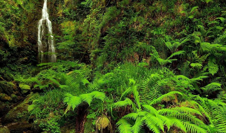 природа, ручей, лес,
