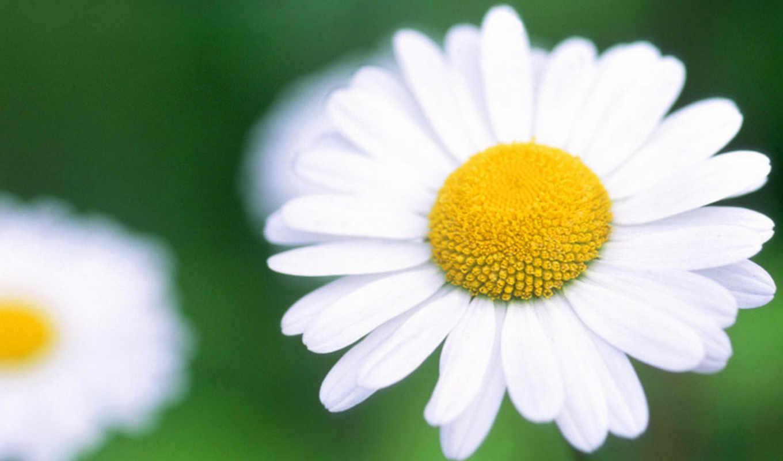 hoa, cực, dài, loài, trứng, vũ, nghĩa, mắt, những,