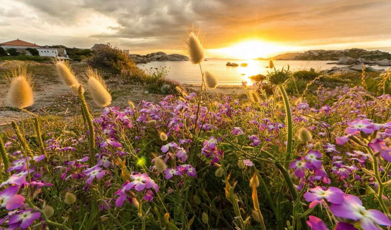 природа, россии, золотого, солнца, ray, страница, russian, лес, цветы, коллекция,