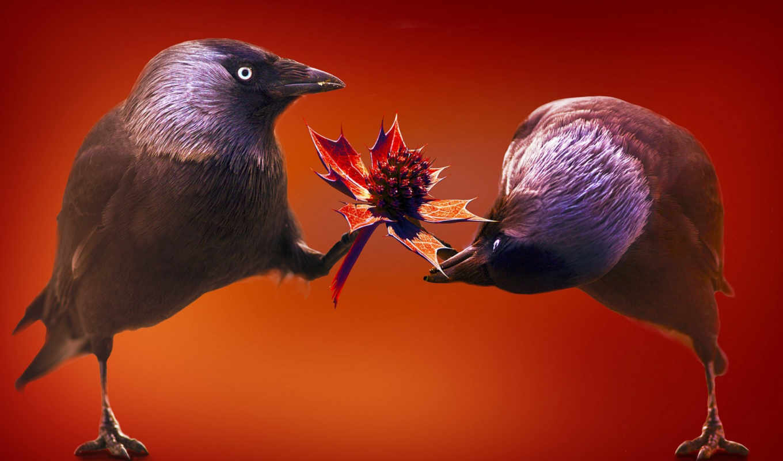 funny, free, desktop, птицы, птиц, глаза, pair,