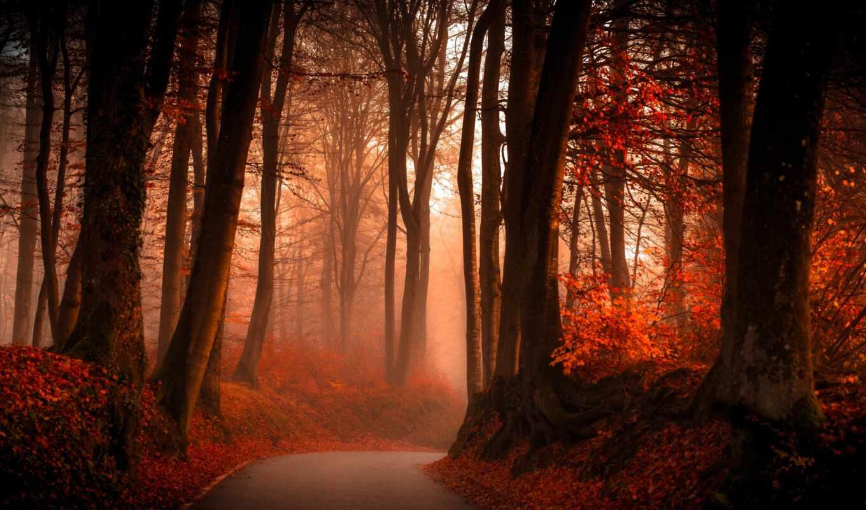 осень, fore, лес, дерево, природа, дорогой, дорога