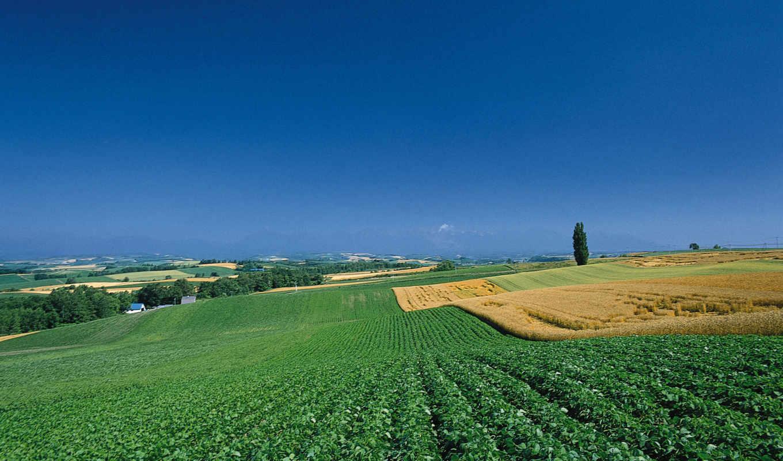 поля, поле, depth, animals, природа, peace, glass, дождь,
