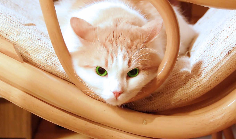 кот, глаза, котенок, зеленые,