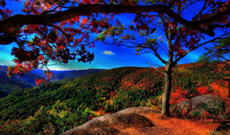 осень, trees, холмы, небо, лес, landscape, свой, золотая, совершенно, красивый,