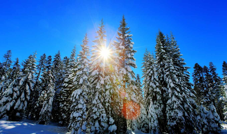 redwoods, восход, california, usa, winter, картинку, смотреть, глазова, войдите, ольга,