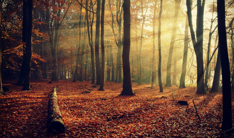 осень, природа, деревья, разделе, листва, лес,