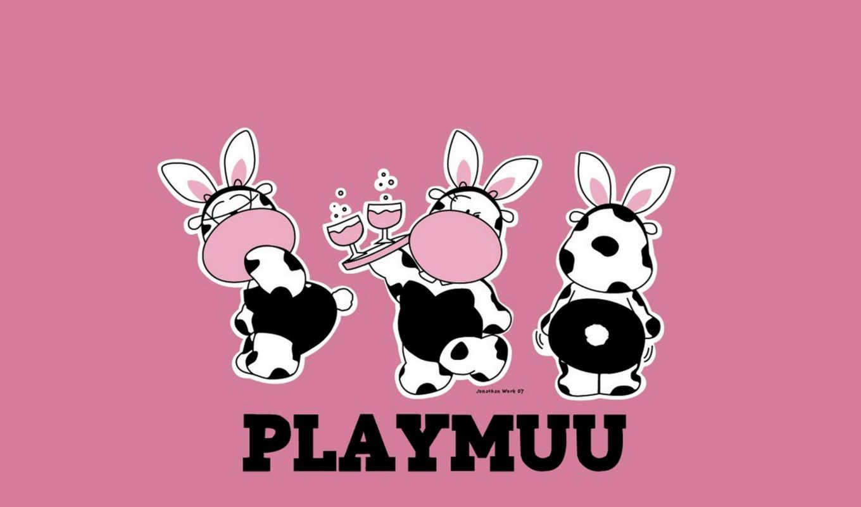 playboy,