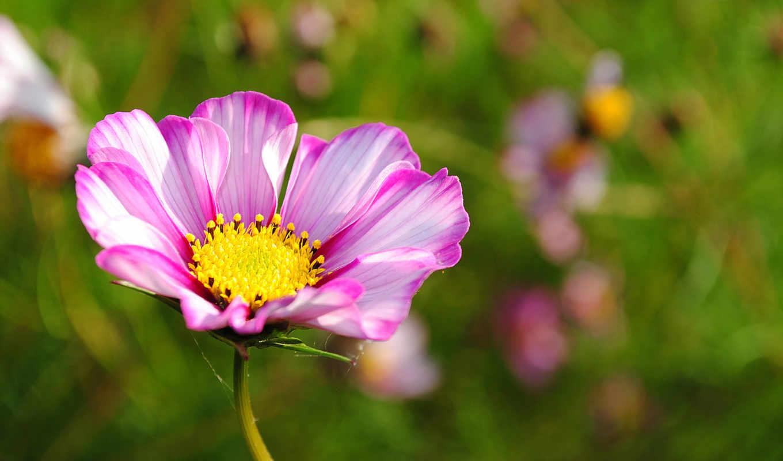цветы, макро, природа, фотографии, подборка, серединкой, желтой, количество,