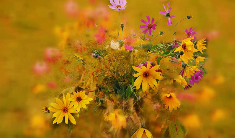 цветы, букет, красавица, природа, категория, совершенно,