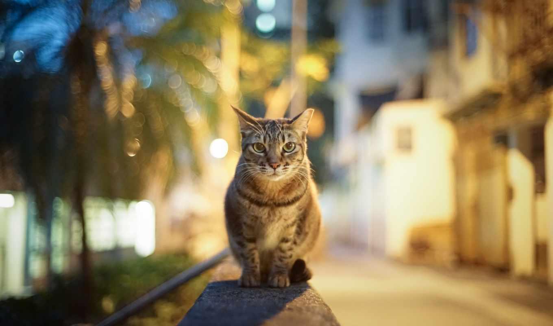 город, вечер, кот, улица, огни, взгляд, блики, городе,