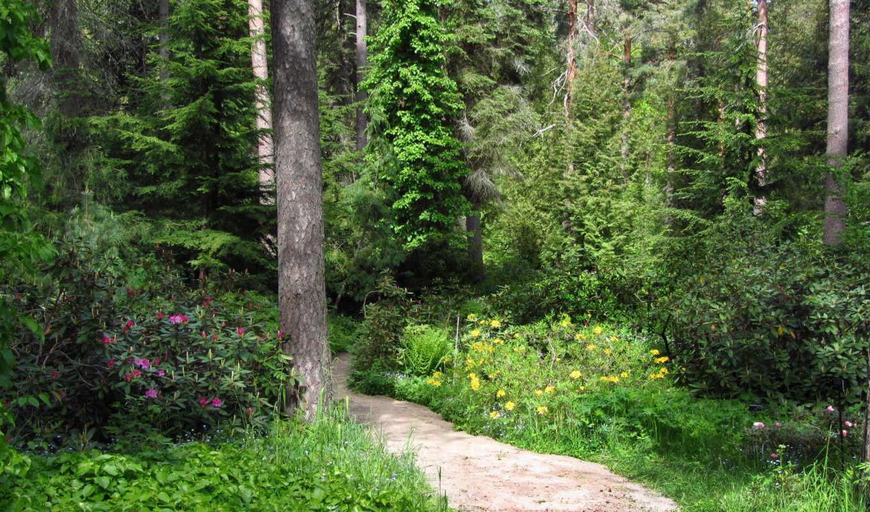финляндия, арборетум, мустила, парки, тропа, деревья, природа, картинка,